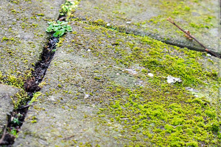 Stenplatta med alger och påväxt