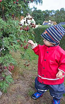 Barnen plockar bär i trädgården